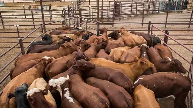 Et ithalatına 6 yılda 4,4 milyar dolar