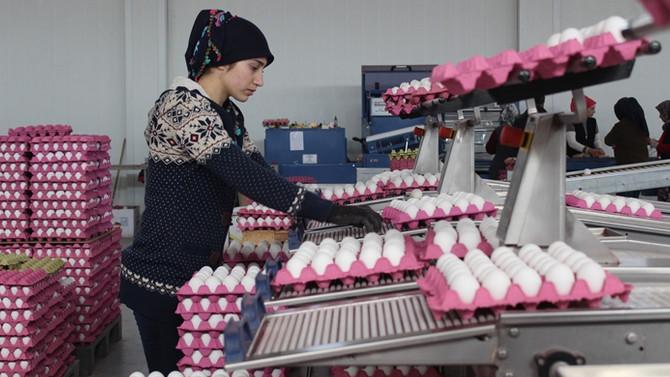 Yumurta fiyatının aylık belirlenmesi ihracatçıyı rahatlattı