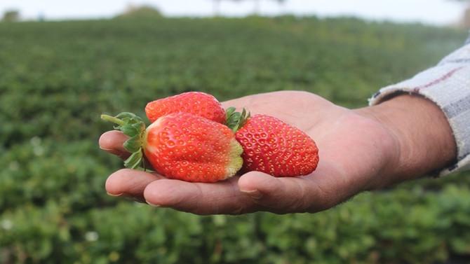 Organik tarım desteği için son 5 gün