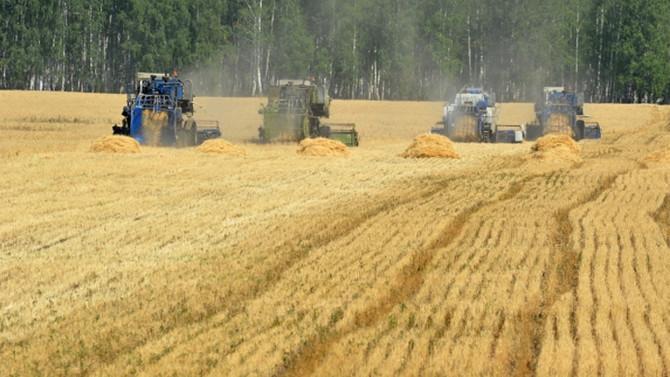 Rusya'dan buğdayı ihracatçı istememiş