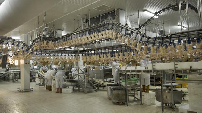 Beyaz et ihracatı yüzde 24 arttı