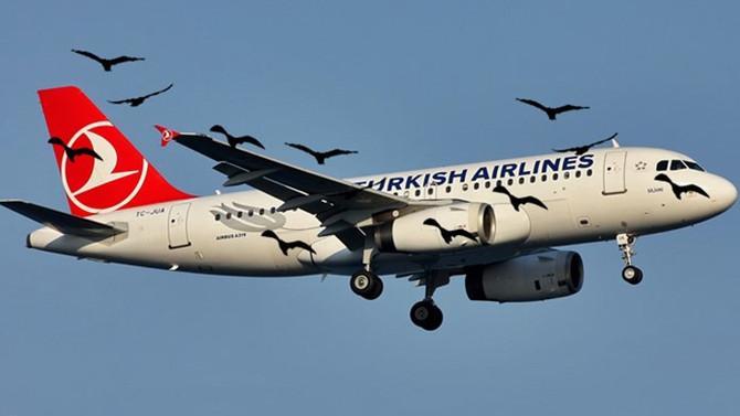 THY uçağı kuşa çarptı