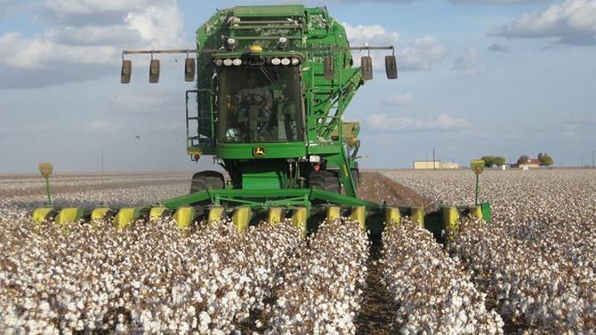 Çin'de pamuk üretimi artacak