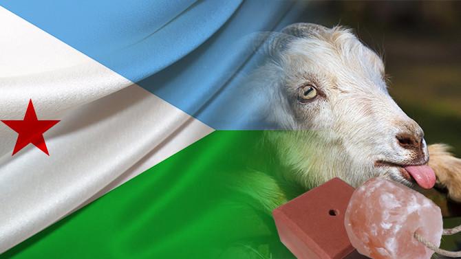 Cibutili müşteri keçi yalama taşı satın alacak