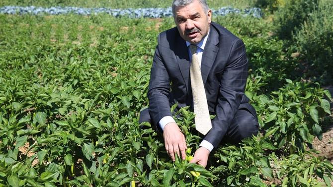 Kayseri, kırsalı organik tarım ve besicilikle kalkındıracak