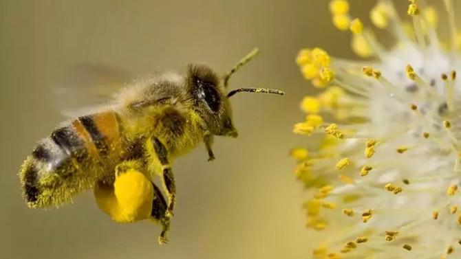 Arıları izleyen Türk bilim insanı, yapay zekada çığır açtı