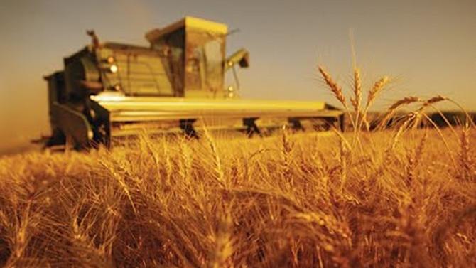 Tarım sigortası yaptıranlar artıyor