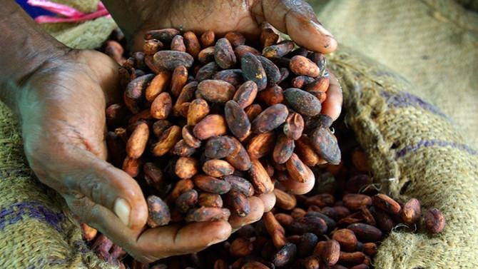Kakao karteli için ilk adım!
