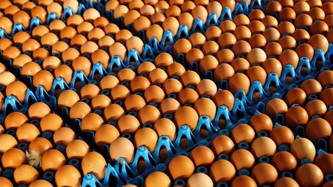 Yumurtada KDV kaldırılsın