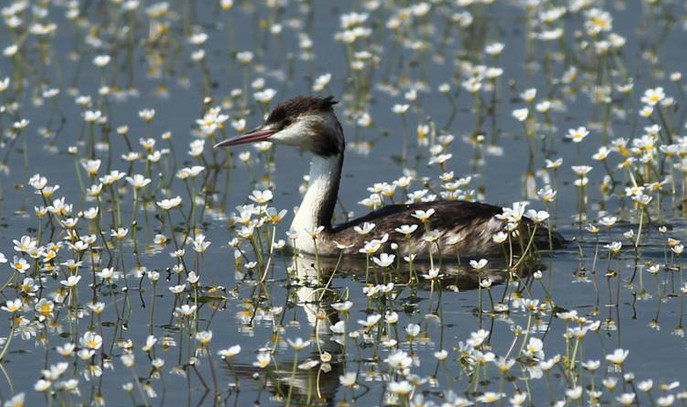 Kızılırmak Deltası kuşlarla şenlendi