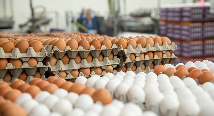 Türkiye'deki yumurtalar 'temiz' çıktı