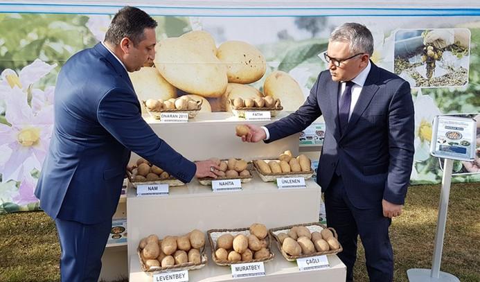 Tescilli 4 yerli patates ihaleyle satışta