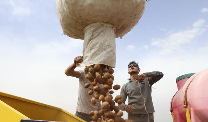 Niğde'de patatesin ekim alanı genişleyecek