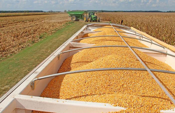 Taşpınar: Stratejik ürün buğdayda acil önlem alınmalı