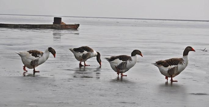 Eber Gölü buz tuttu