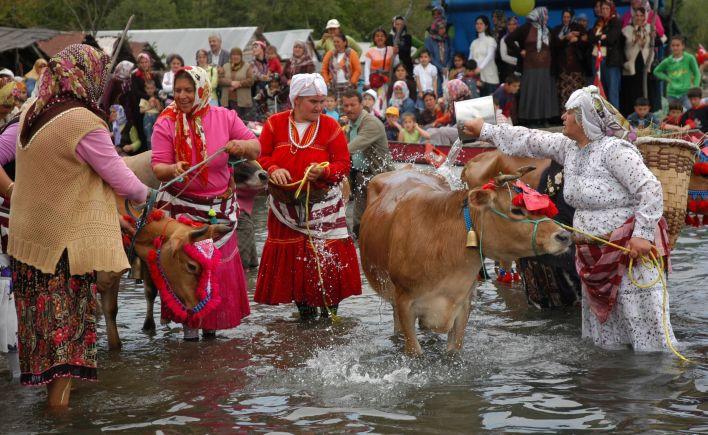 'Mayıs Yedisi'nde, inekler deniz suyu ile yıkandı