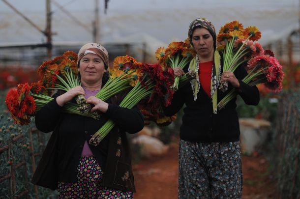 Sevgilileri Türk çiçekleri mutlu edecek
