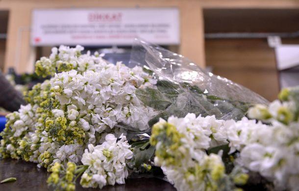"""17 milyon çiçek """"yarın""""ı bekliyor"""