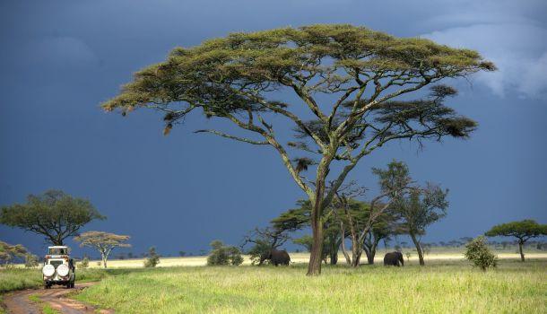 AA Serengeti'yi keşfetti