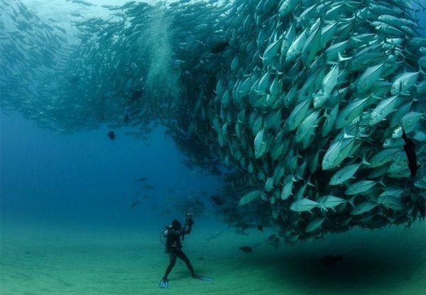 Su altından muhteşem görüntüler