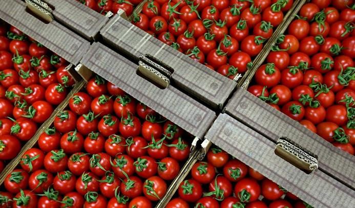 Rusya'ya domates ihracatı için tarih verildi