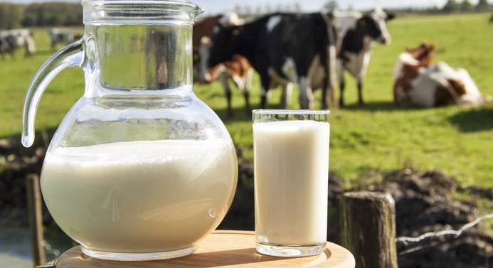 Toplanan inek sütü miktarında artış yaşandı