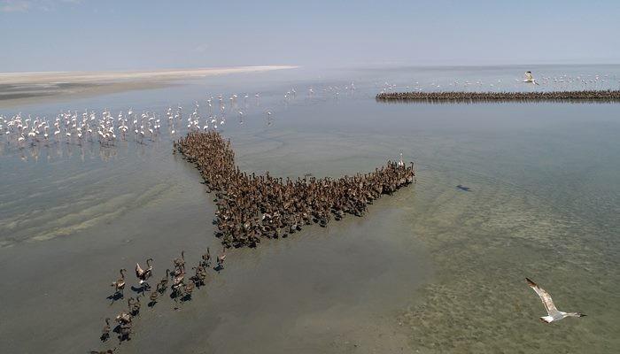 Anadolu'nun flamingo cenneti: Tuz Gölü