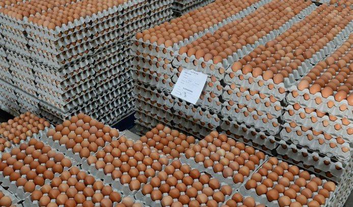 Yumurta krizi Türkiye için fırsat olur mu?