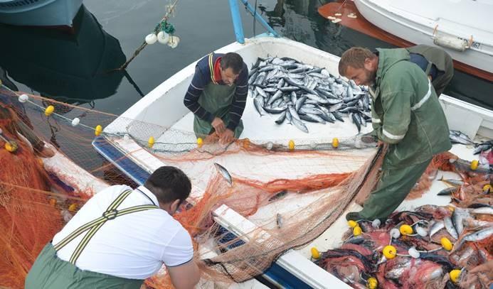 Palamut avı balıkçılara umut verdi