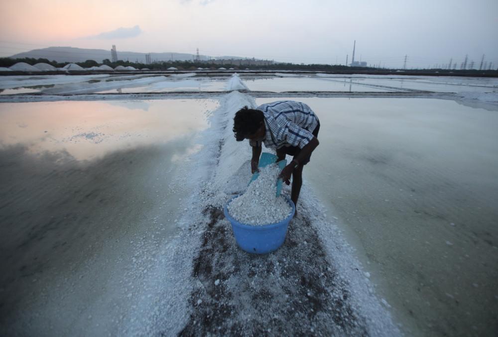 Hindistan'daki tuz hasadından kareler