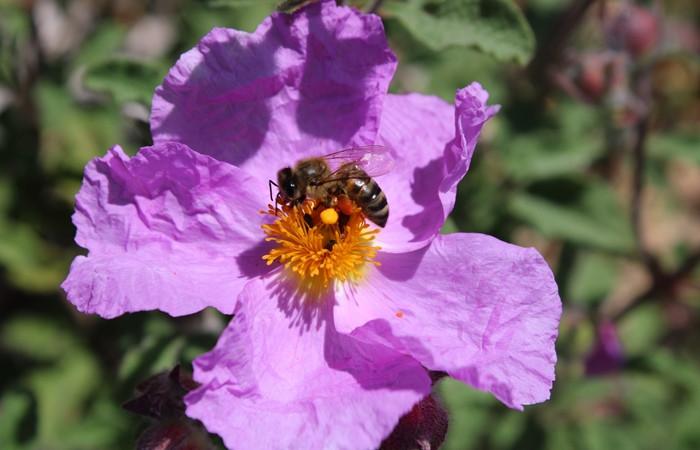Mersinli arıcılar sezonun ilk polen hasadına başladı - Sayfa 1