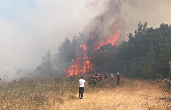 Bu yılki yangınlarda 4 bin 298 hektar orman alanı zarar gördü