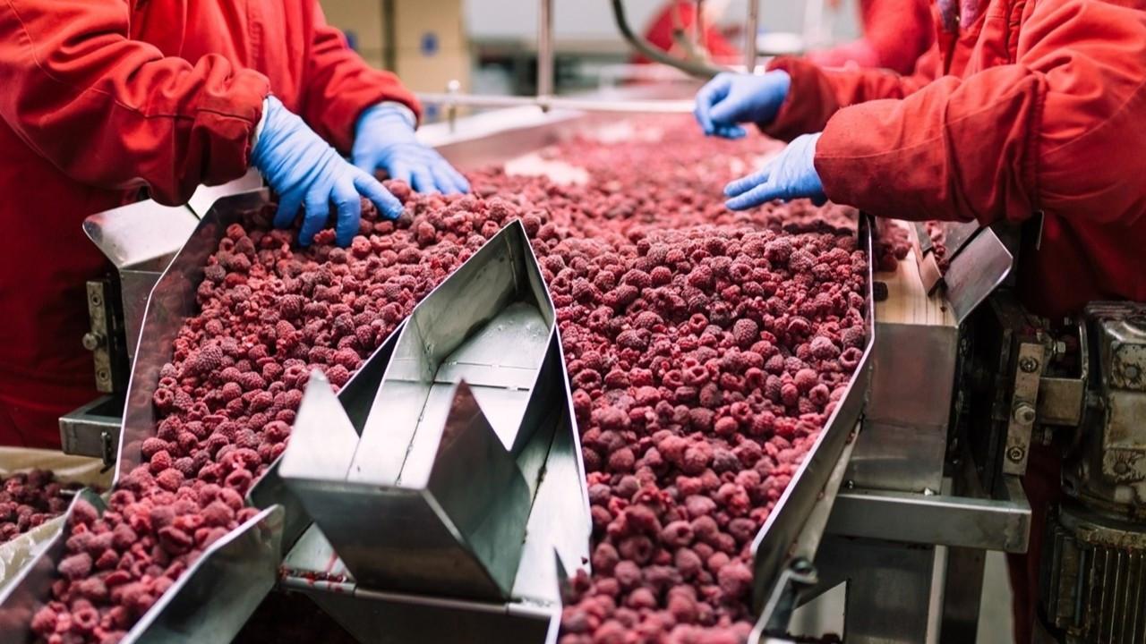 Türkiye Dondurulmuş Gıda Sanayii Derneği kuruldu