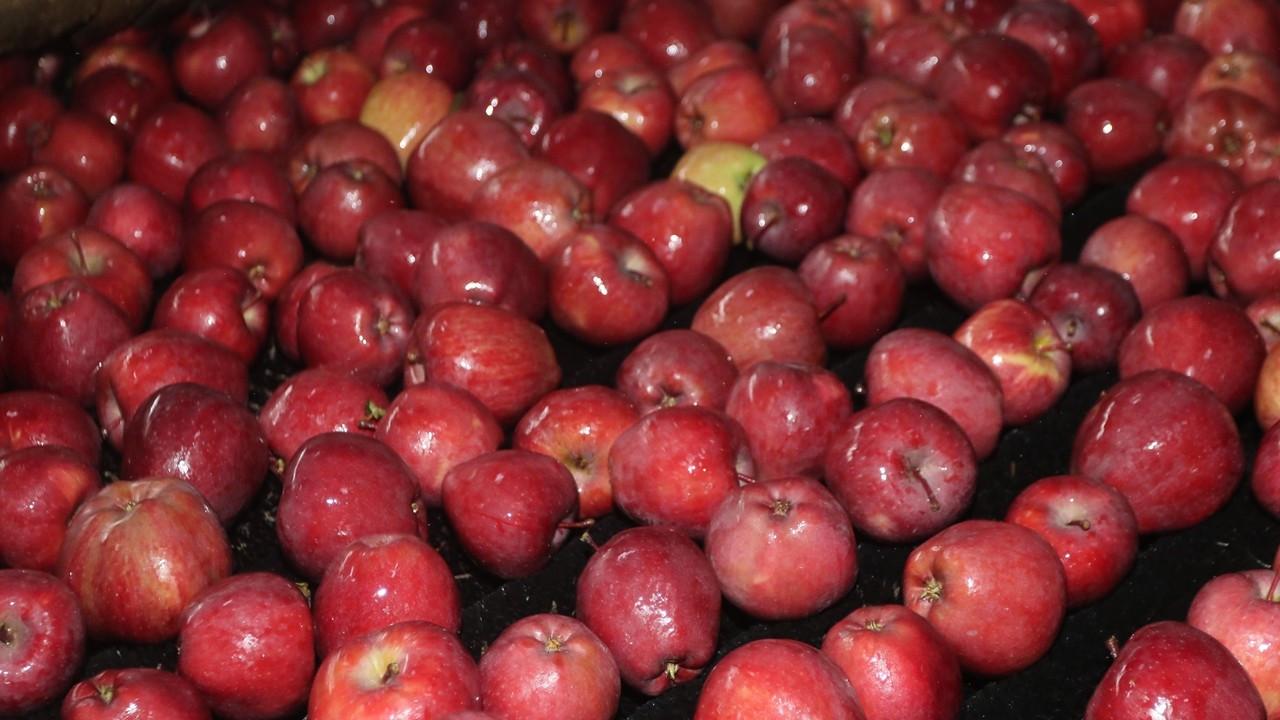 Karaman, 20 ülkeye elma ihracatı yapıyor
