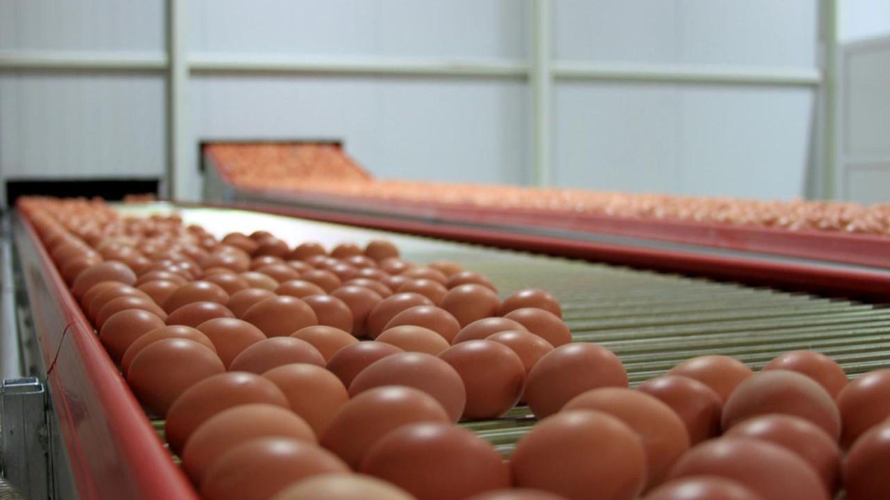 İhracatta hamle yapamayan yumurtacı Irak'a kaçıyor