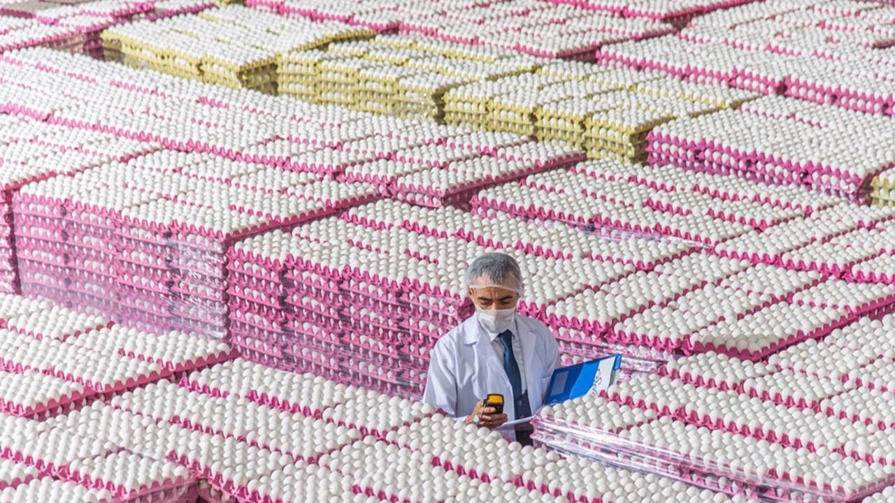 Yumurta üreticisi sahte yumurtaya karşı 'çapraz denetimi' istiyor