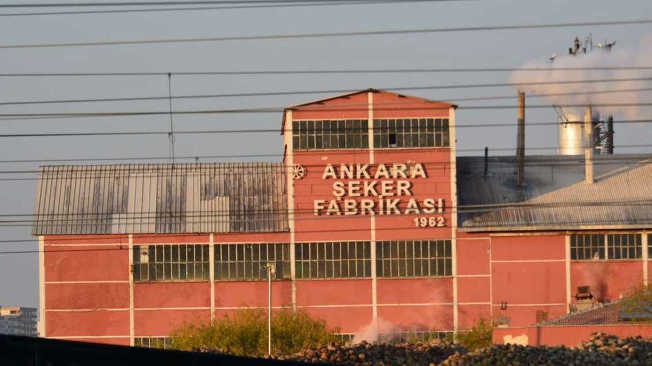 Türkşeker ilk topraksız tarım serasını Ankara'da kurdu