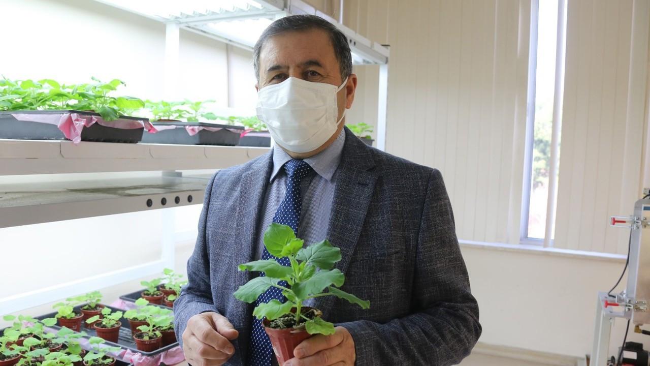 Akdeniz Üniversitesi, tütün bitkisinden COVID-19 ilacı geliştirdi
