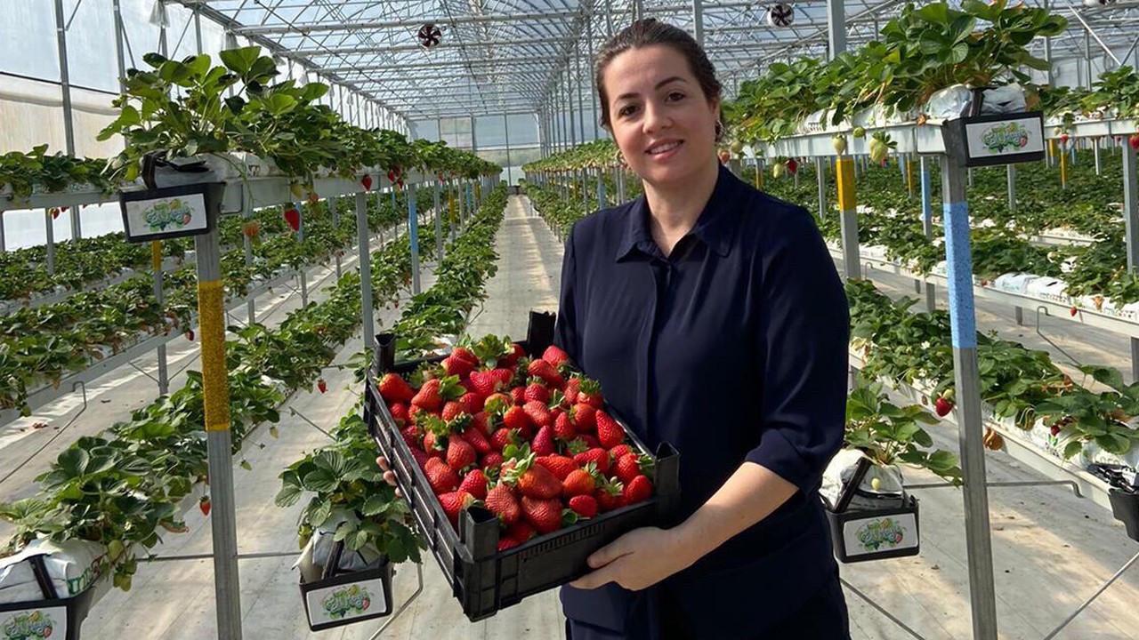 En Meyve, topraksız çilek serasını büyüterek ihracatı hedefliyor