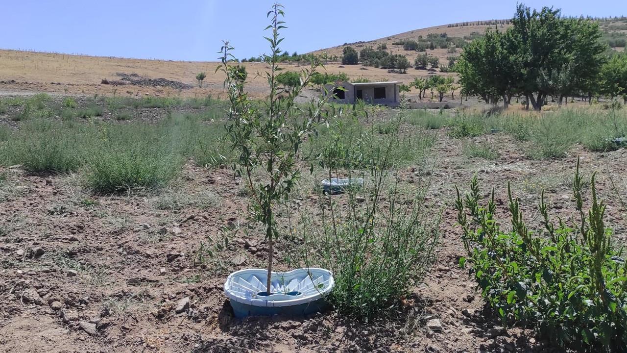 Ekobox ile kurak arazilerde meyve yetiştirilecek