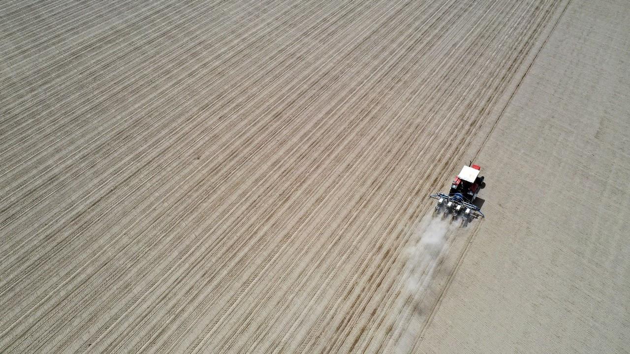 Bu yıl 800 bin ton lif pamuk üretilmesi hedefleniyor