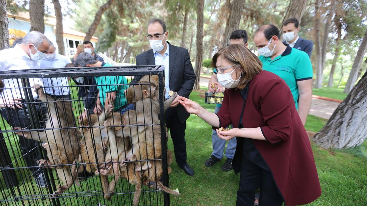 Sınırda yakalanan hayvanlar Gaziantep Hayvanat Bahçesi'ne emanet