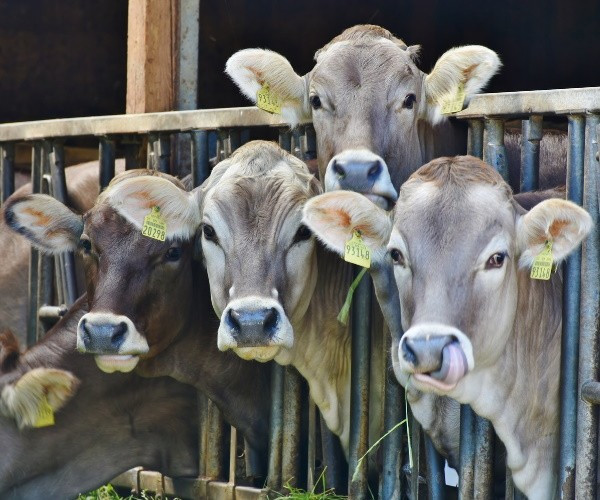Tüketici kırmızı eti yüzde 30 zamlı yiyecek