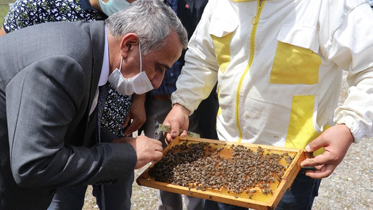 "Samsun'da""Ana Arı Üretim Merkezi"" faaliyete geçti"
