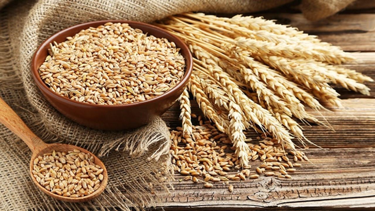 Antalya Batı Akdeniz Tarımsal Araştırma Enstitüsü Müdürlüğü buğday satış ihalesi yapacak