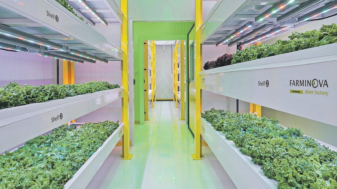 Gıda krizine yeni çözüm: Topraksız bitki fabrikası