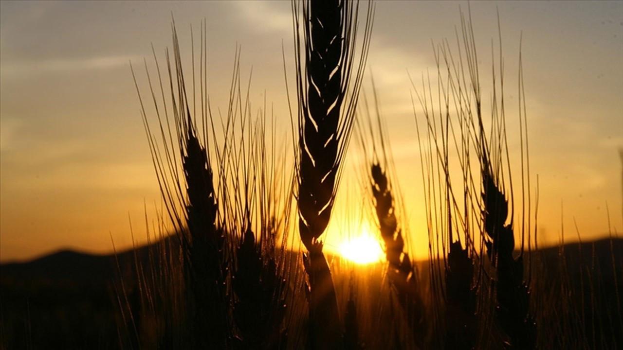 TMO'ya ithal arpa tepkisi: Çiftçinin piyasada ezilmesine neden oluyor