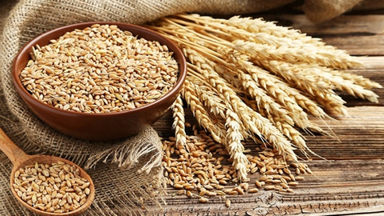 TMO, 395 bin ton ekmeklik buğday aldı