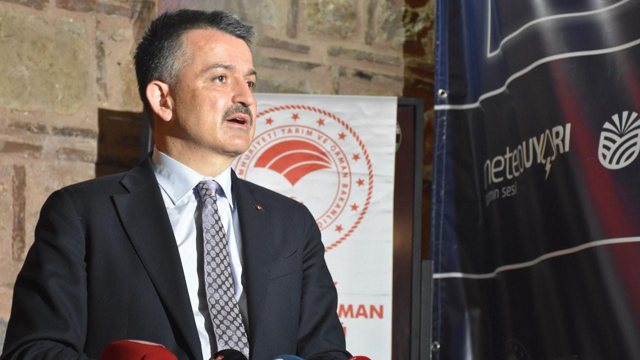 'Marmara Denizi'ndeki balıklar tüketilebilir'