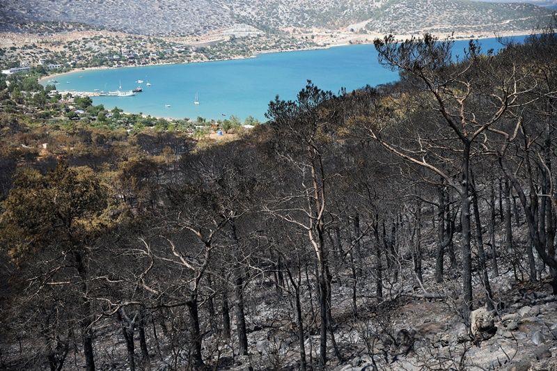 Müdahale devam ediyor: Orman yangınlarında son durum - Sayfa 2